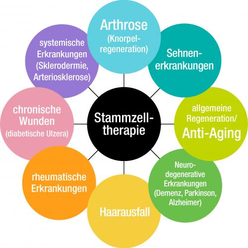 stammzell_diagramm